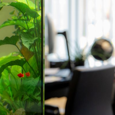 Kanzlei Kuhlmann Rechtsanwaltsgesellschaft mbH Aquarium